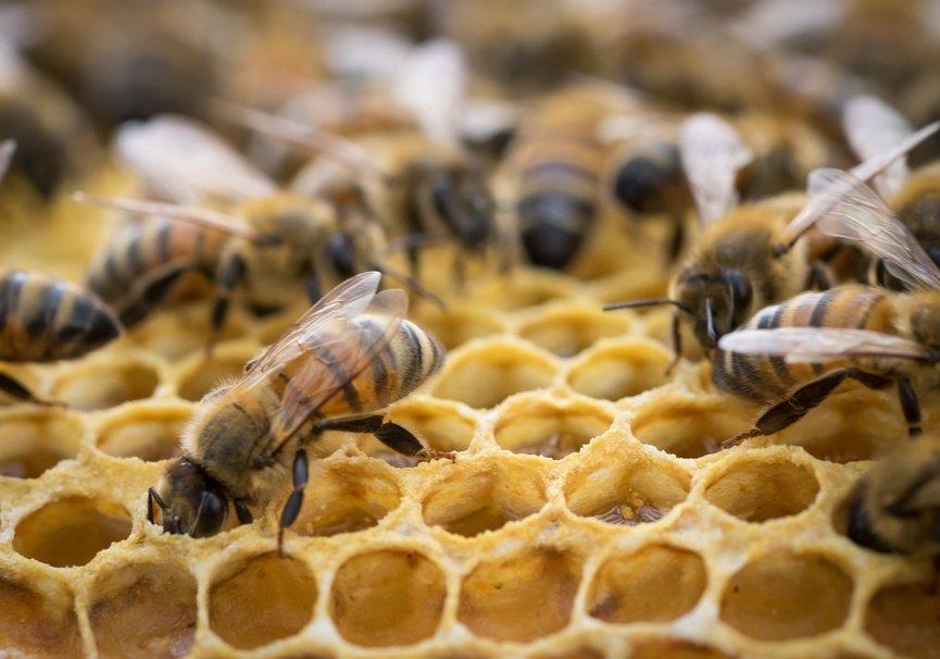 Medium inside the bee hive