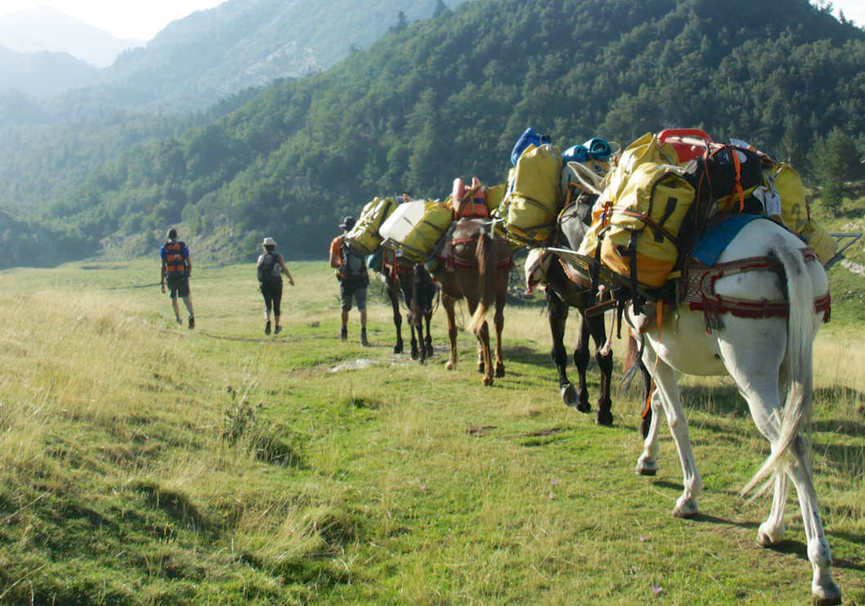 Medium trekkingmule espeleo land web