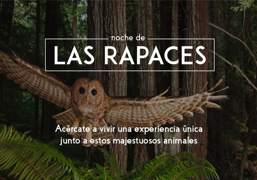 Medium aves rapaces yatapeqieno.saxcjpg