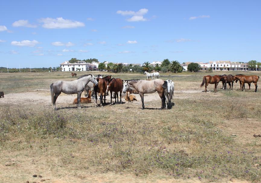 Medium paseo a caballo 2