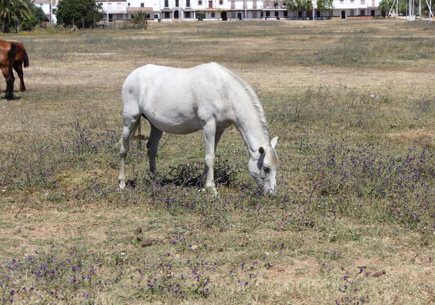 Medium paseo a caballo 1