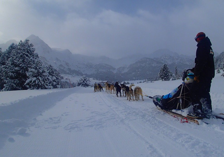 Medium rocroi mushing 8