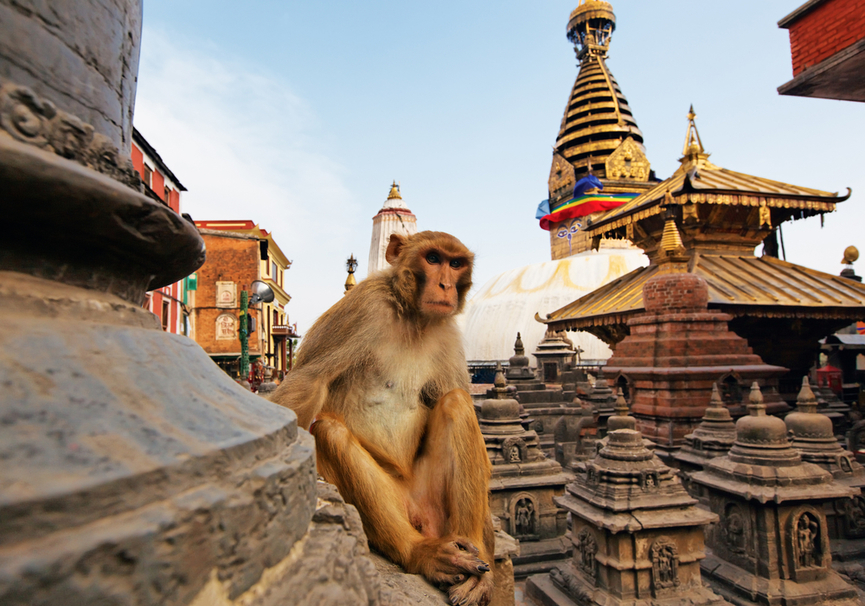 Medium monkey temple patan
