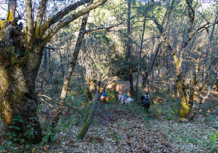 Medium bosque2