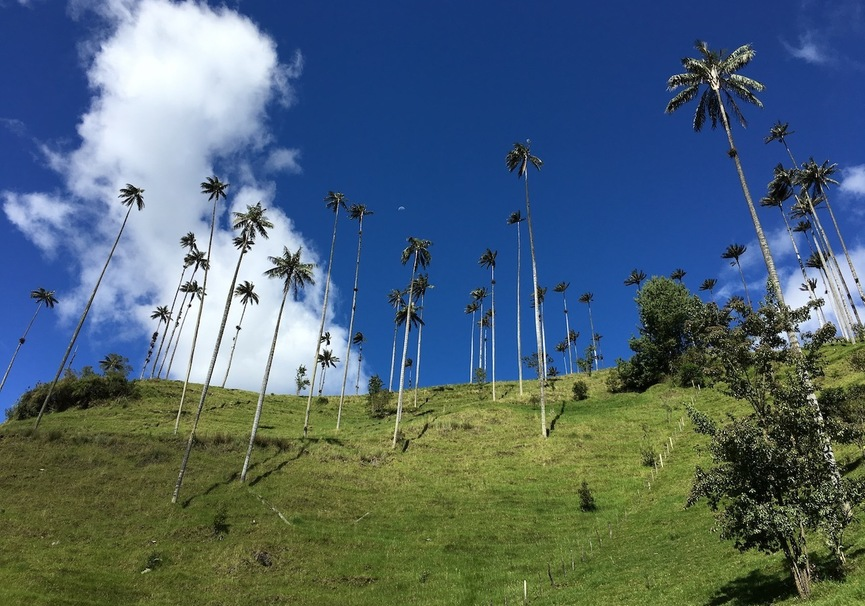 Medium valle de cocora 1