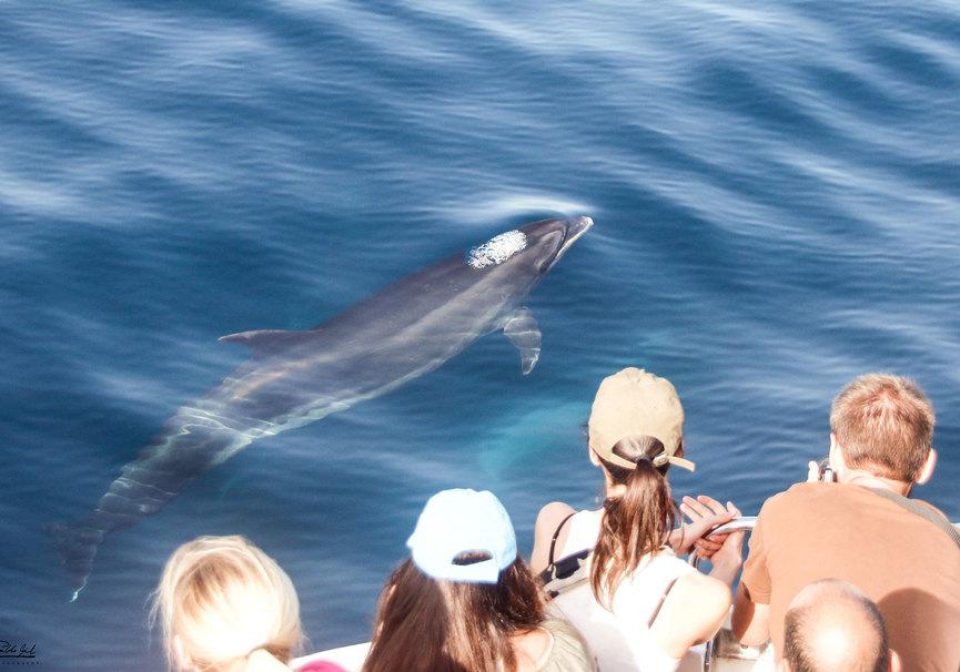 Medium superior salidas delfines