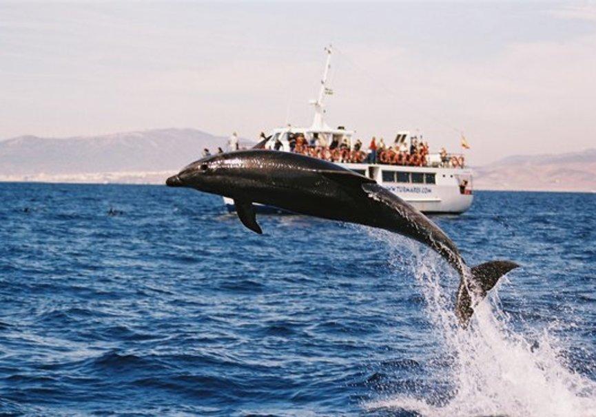 Medium avistamiento delfines tarifa