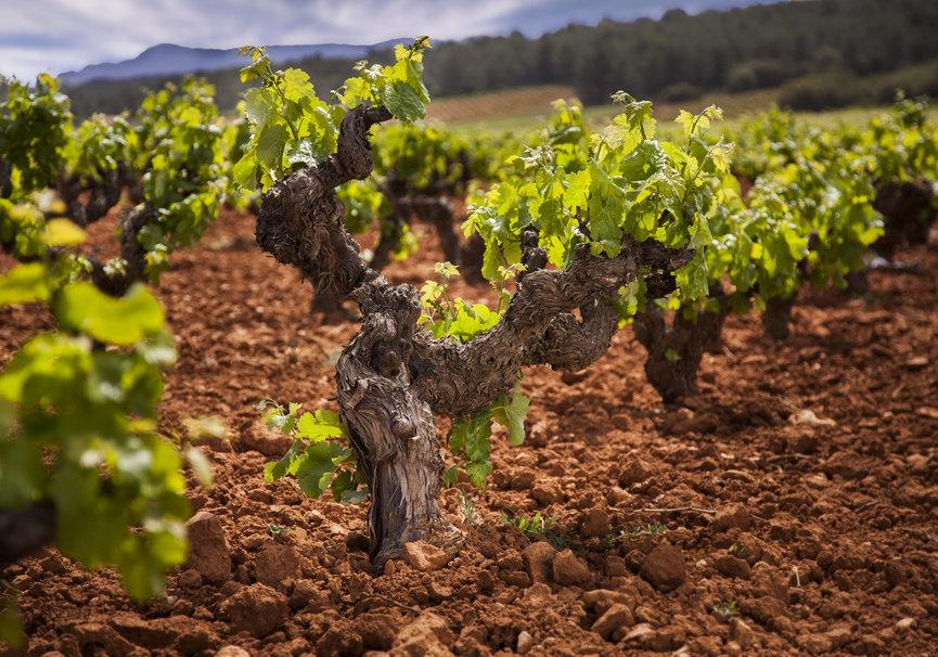 Medium la do utiel requena expide un vi%c3%b1a vino vid m%c3%a1s de contraetiquetas en 2016