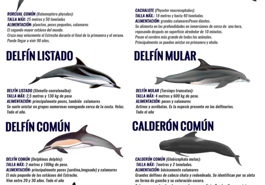 Medium turmares cetaceos