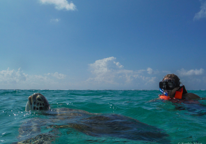 Medium swimming marine turtle   ecocolorstours