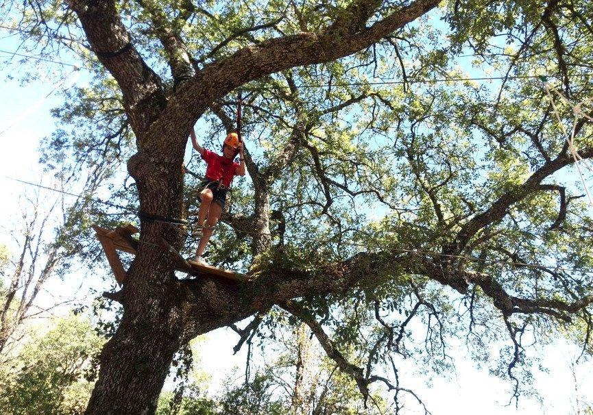 Medium gran arboreo